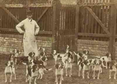 مجموعة-كلاب-صيد